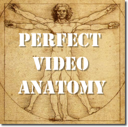 perfect profitable video anatomy